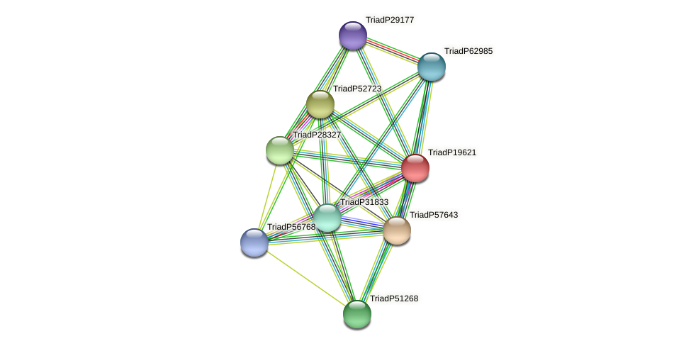 TriadP19621 protein (Trichoplax adhaerens) - STRING interaction network