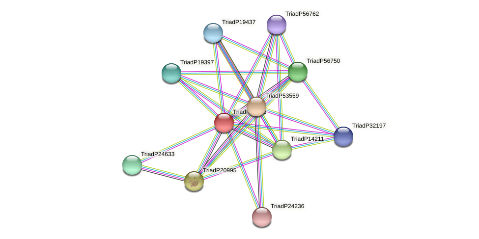 TriadP19715 protein (Trichoplax adhaerens) - STRING interaction network
