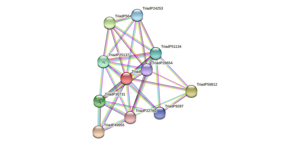 TriadP19948 protein (Trichoplax adhaerens) - STRING interaction network