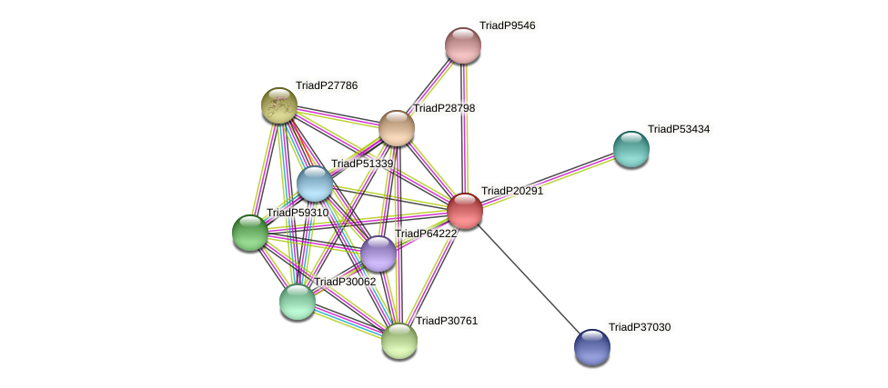 TriadP20291 protein (Trichoplax adhaerens) - STRING interaction network