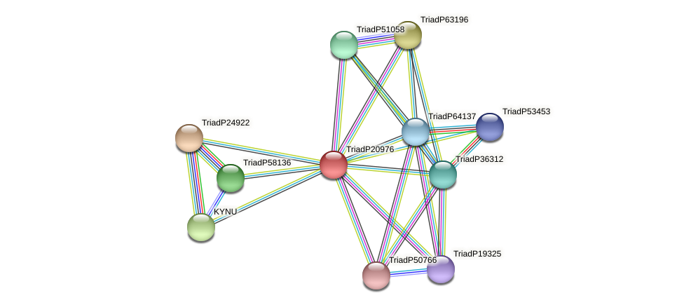 TriadP20976 protein (Trichoplax adhaerens) - STRING interaction network