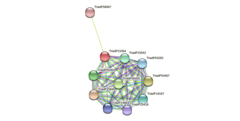 TriadP21064 protein (Trichoplax adhaerens) - STRING interaction network