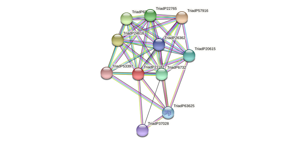 TriadP21182 protein (Trichoplax adhaerens) - STRING interaction network