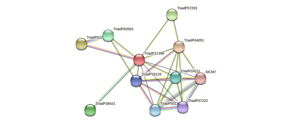 TriadP21399 protein (Trichoplax adhaerens) - STRING interaction network