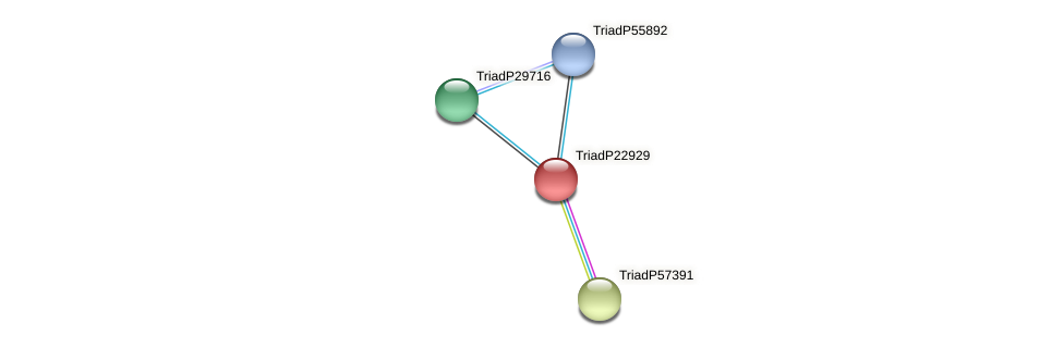TriadP22929 protein (Trichoplax adhaerens) - STRING interaction network