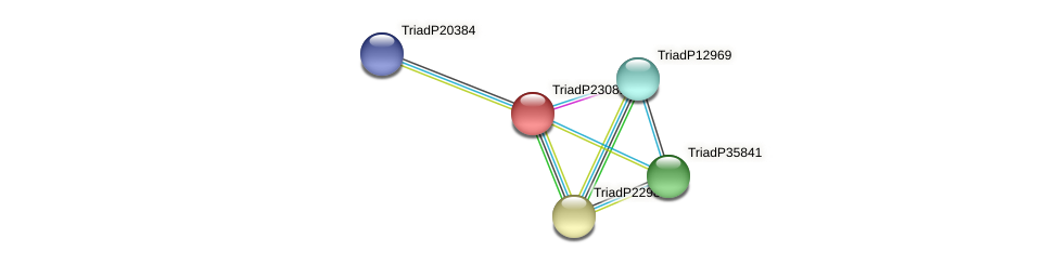 TriadP23081 protein (Trichoplax adhaerens) - STRING interaction network