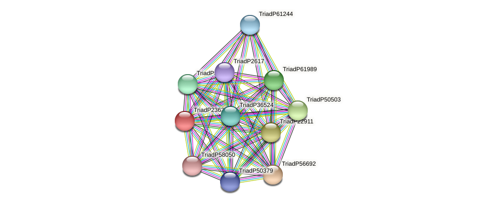 TriadP23638 protein (Trichoplax adhaerens) - STRING interaction network
