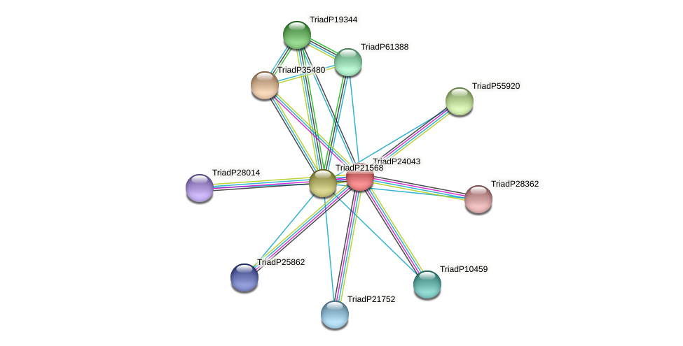TriadP24043 protein (Trichoplax adhaerens) - STRING interaction network