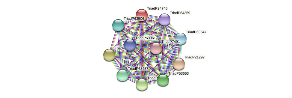 TriadP24746 protein (Trichoplax adhaerens) - STRING interaction network