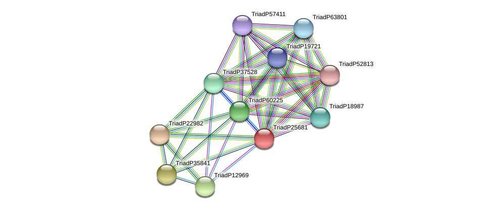 TriadP25681 protein (Trichoplax adhaerens) - STRING interaction network