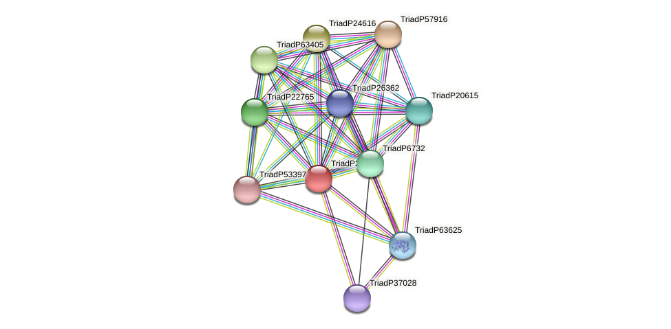 TriadP25687 protein (Trichoplax adhaerens) - STRING interaction network