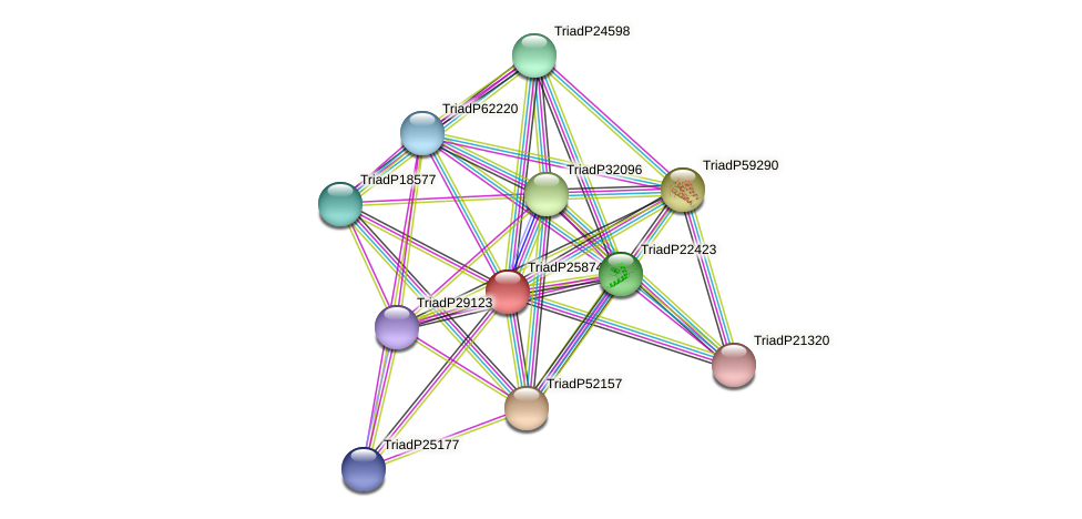 TriadP25874 protein (Trichoplax adhaerens) - STRING interaction network