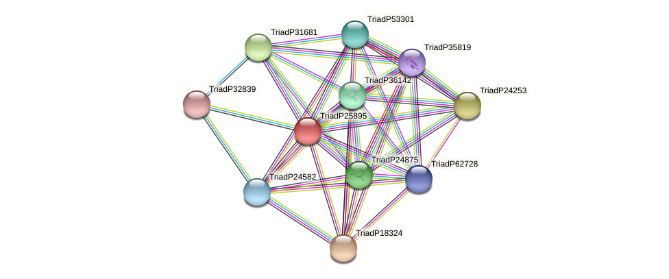 TriadP25895 protein (Trichoplax adhaerens) - STRING interaction network