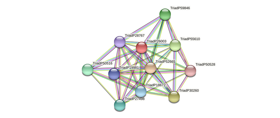 TriadP26003 protein (Trichoplax adhaerens) - STRING interaction network