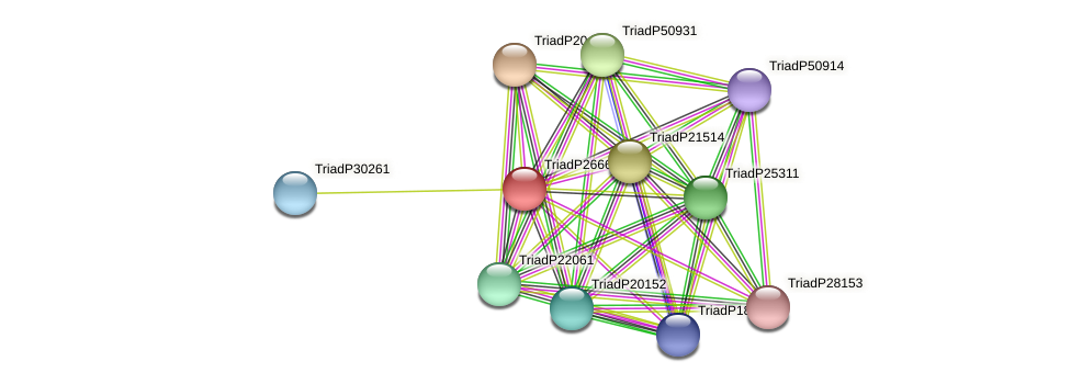 TriadP26661 protein (Trichoplax adhaerens) - STRING interaction network