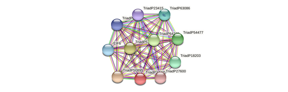 TriadP27425 protein (Trichoplax adhaerens) - STRING interaction network
