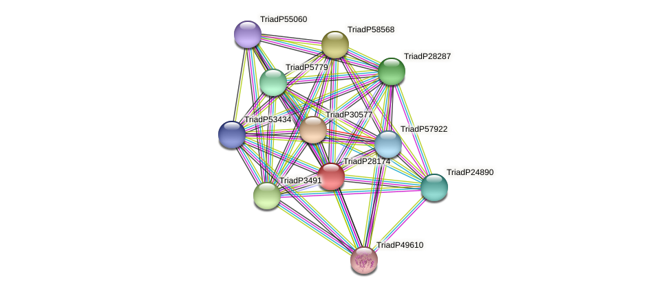 TriadP28174 protein (Trichoplax adhaerens) - STRING interaction network