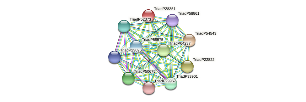 TriadP28351 protein (Trichoplax adhaerens) - STRING interaction network