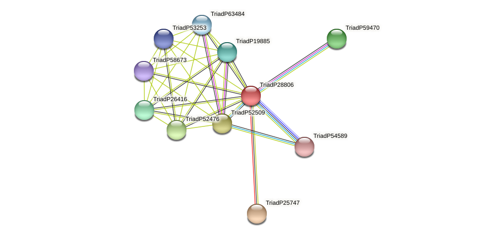 TriadP28806 protein (Trichoplax adhaerens) - STRING interaction network