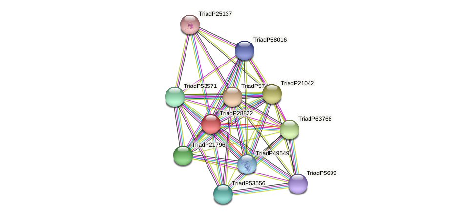 TriadP28822 protein (Trichoplax adhaerens) - STRING interaction network