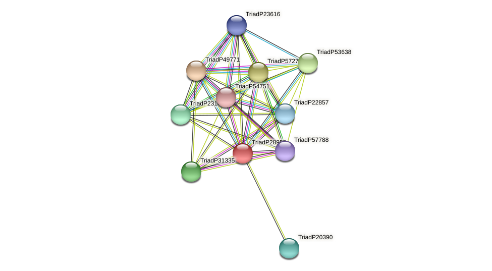 TriadP28955 protein (Trichoplax adhaerens) - STRING interaction network