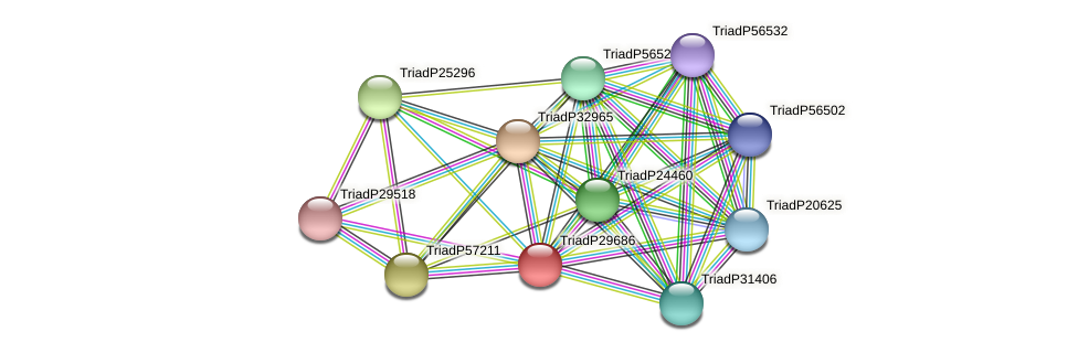 TriadP29686 protein (Trichoplax adhaerens) - STRING interaction network
