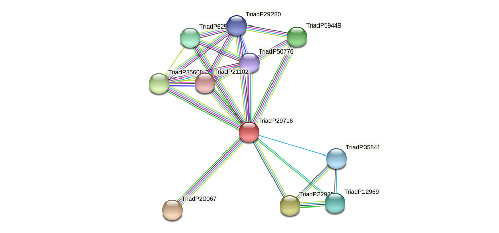 TriadP29716 protein (Trichoplax adhaerens) - STRING interaction network