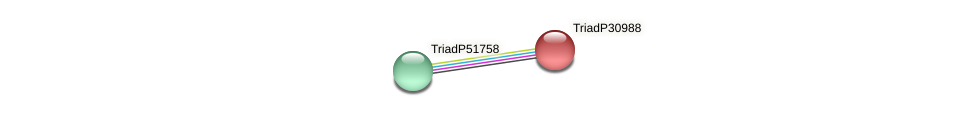 TriadP30988 protein (Trichoplax adhaerens) - STRING interaction network