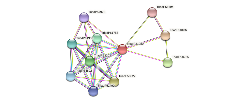 TriadP31080 protein (Trichoplax adhaerens) - STRING interaction network
