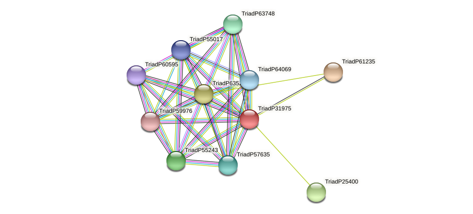 TriadP31975 protein (Trichoplax adhaerens) - STRING interaction network