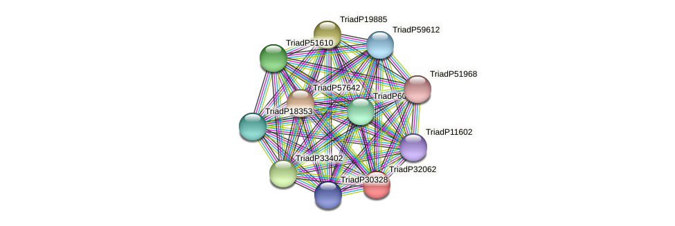 TriadP32062 protein (Trichoplax adhaerens) - STRING interaction network