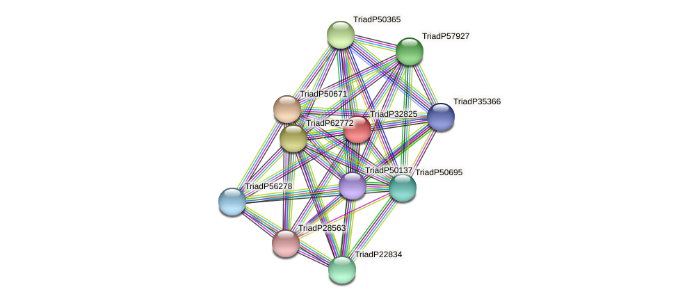 TriadP32825 protein (Trichoplax adhaerens) - STRING interaction network