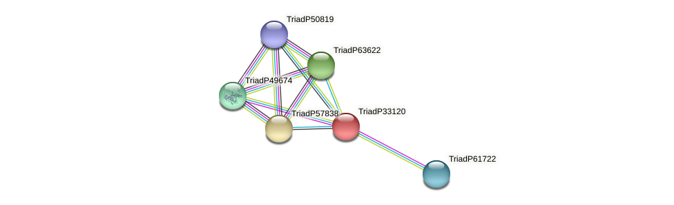 TriadP33120 protein (Trichoplax adhaerens) - STRING interaction network