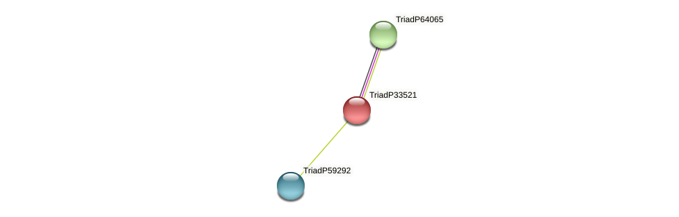 TriadP33521 protein (Trichoplax adhaerens) - STRING interaction network