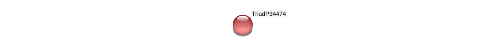 TriadP34474 protein (Trichoplax adhaerens) - STRING interaction network