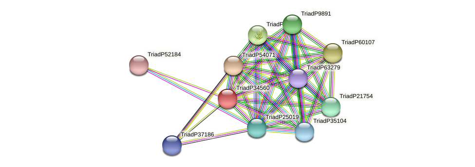 TriadP34560 protein (Trichoplax adhaerens) - STRING interaction network