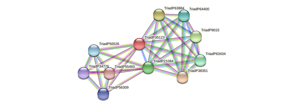 TriadP35123 protein (Trichoplax adhaerens) - STRING interaction network