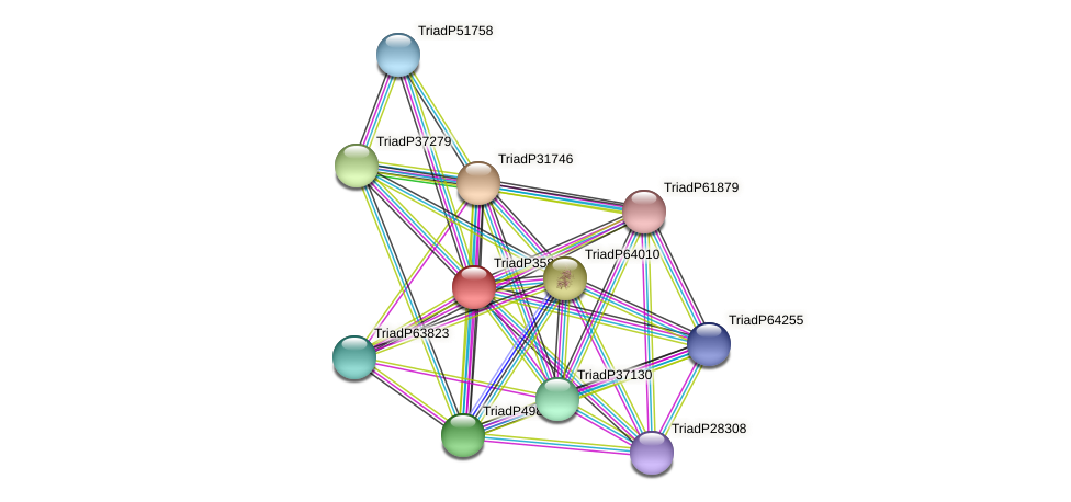 TriadP35829 protein (Trichoplax adhaerens) - STRING interaction network