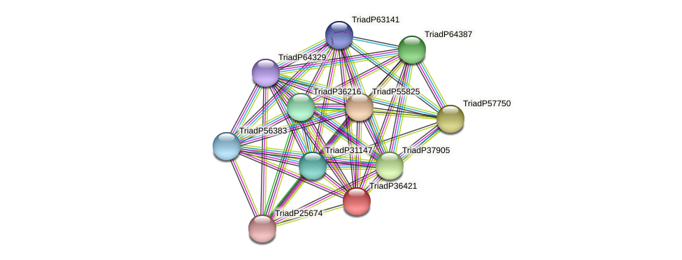 TriadP36421 protein (Trichoplax adhaerens) - STRING interaction network