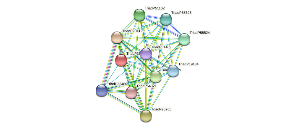 TriadP36890 protein (Trichoplax adhaerens) - STRING interaction network