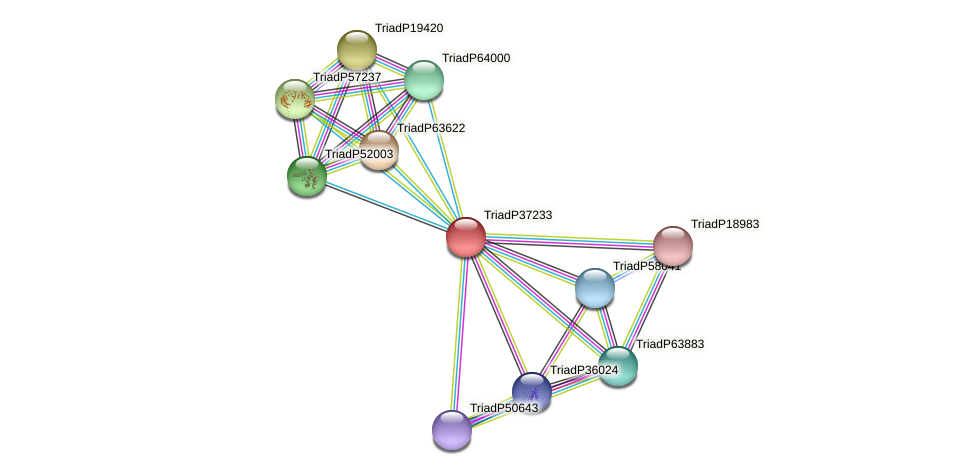 TriadP37233 protein (Trichoplax adhaerens) - STRING interaction network