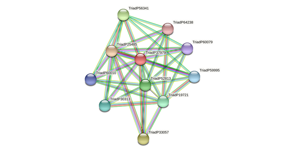 TriadP37979 protein (Trichoplax adhaerens) - STRING interaction network