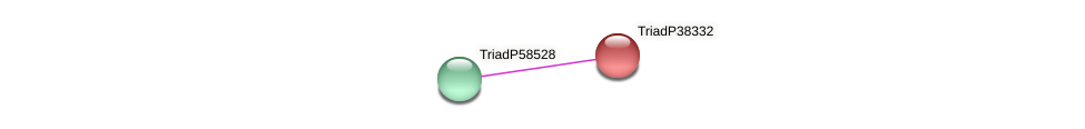 TriadP38332 protein (Trichoplax adhaerens) - STRING interaction network