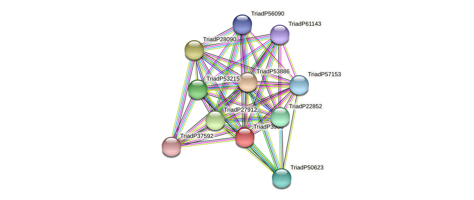 TriadP3988 protein (Trichoplax adhaerens) - STRING interaction network