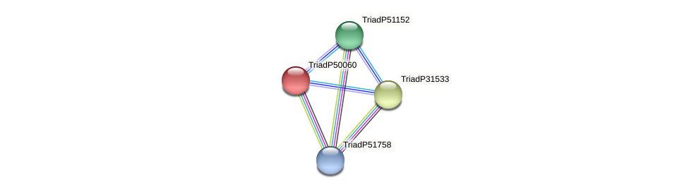 TriadP50060 protein (Trichoplax adhaerens) - STRING interaction network