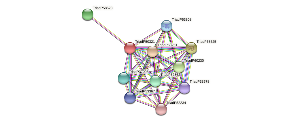 TriadP50321 protein (Trichoplax adhaerens) - STRING interaction network