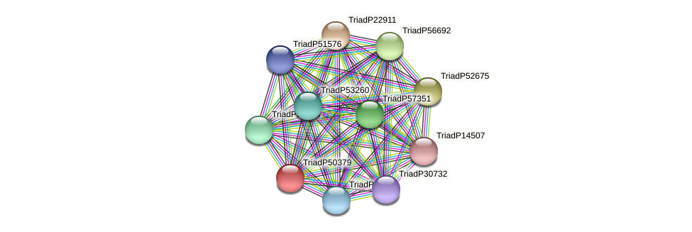 TriadP50379 protein (Trichoplax adhaerens) - STRING interaction network