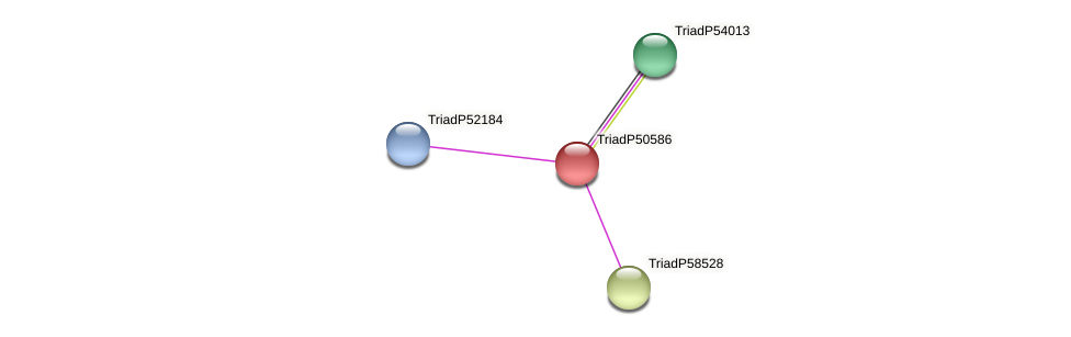 TriadP50586 protein (Trichoplax adhaerens) - STRING interaction network