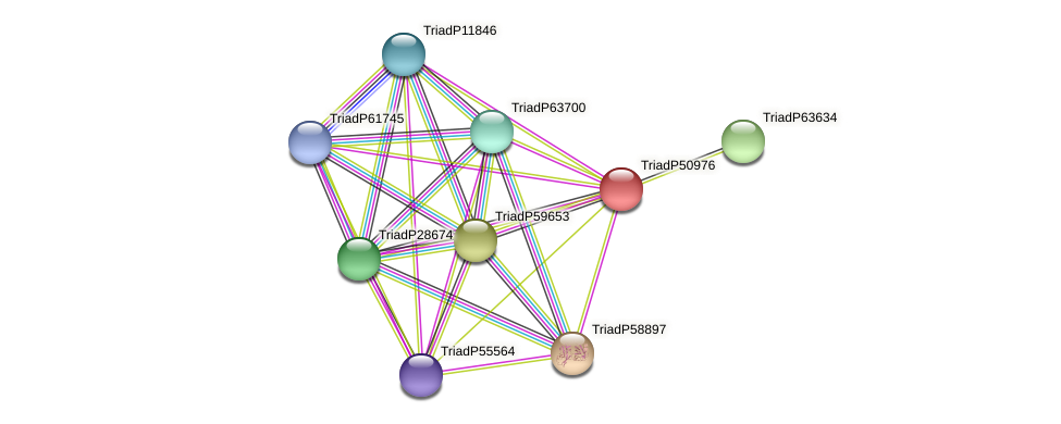 TriadP50976 protein (Trichoplax adhaerens) - STRING interaction network