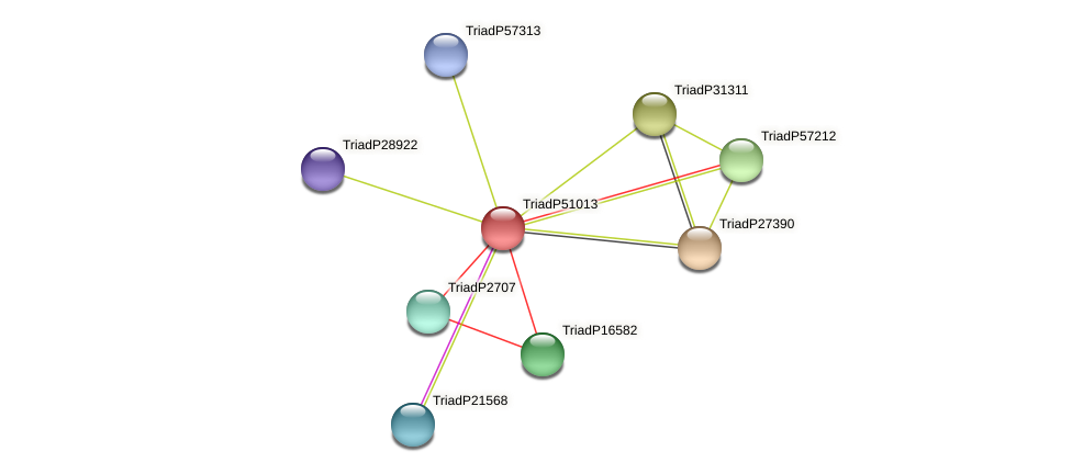 TriadP51013 protein (Trichoplax adhaerens) - STRING interaction network